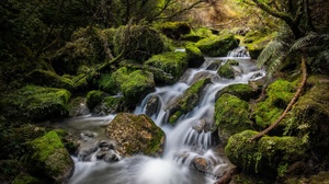 Greenery Moss Nature New Zealand Stream 2048x1366 Wallpaper