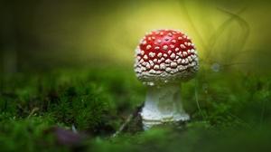 Macro Moss Mushroom Nature 2000x1334 Wallpaper