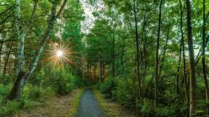 Forest Road Summer Sun 3840x2160 Wallpaper