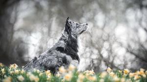 Daffodil Dog Pet 2048x1365 Wallpaper