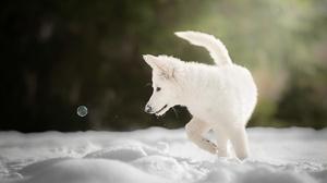 Dog Pet Baby Animal Puppy Snow 2048x1416 wallpaper