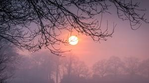 Winter Sun Branch Fog 3657x2438 Wallpaper