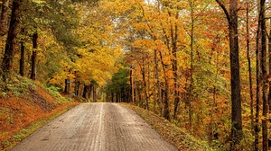 Fall Forest Road Virginia State In Usa 2048x1295 wallpaper