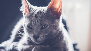 Cat Pet Sunny 2048x1386 wallpaper