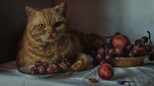 Animals Indoors Cats Mammals Food Fruit Berries Feline 1920x1280 Wallpaper