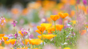 Colorful Outdoors Flowers Plants 2048x1362 Wallpaper