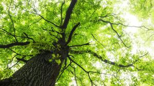 Canopy Foliage Green Nature Sunny Tree 2048x1365 Wallpaper