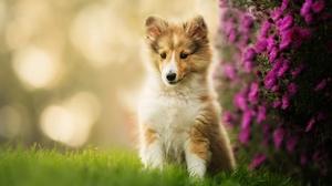 Dog Pet Puppy Baby Animal 2048x1363 Wallpaper