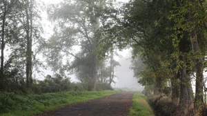 Nature Mist Path Forest 5760x3840 Wallpaper
