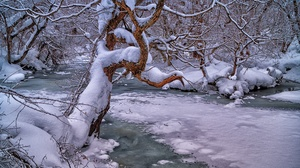 Nature Winter Cold Ice Trees Creeks Outdoors Snow 2560x1703 Wallpaper