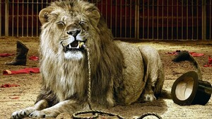 Lion Cages Circus Eating Top Hat Whips Dark Humor 1280x800 Wallpaper