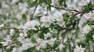 Blossom Branch Flower Nature Spring White Flower 3000x1993 Wallpaper