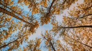 Canopy Earth Foliage Forest Tree 5184x3888 Wallpaper