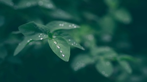 Leaf Macro Nature Water Drop 4608x3456 Wallpaper