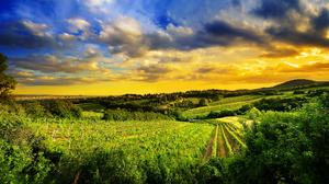 Austria Cloud Countryside Field Green Hill Landscape Sky Vienna Vineyard 3840x2160 Wallpaper