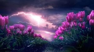 Cloud Flower Lightning Nature Pink Flower Summer Tulip 2560x1639 Wallpaper