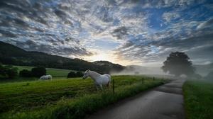 Sky Outdoors Road Animals Clouds Sunlight Horse Mammals 3840x2160 Wallpaper