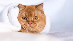 Animal Cat 2560x1707 Wallpaper