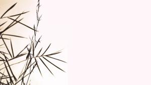 Earth Bamboo 1900x1280 Wallpaper