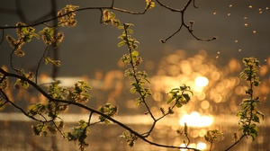 Blur Branch Leaf Macro Nature Spring 3840x2160 Wallpaper