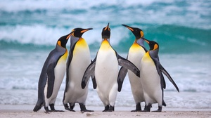 Penguin Wildlife 2048x1366 wallpaper