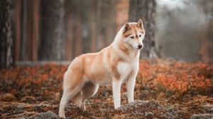 Dog Pet 2500x1667 Wallpaper