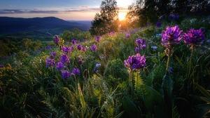 Flower Grass Meadow Mountain Sunbeam Sunset 1920x1200 Wallpaper