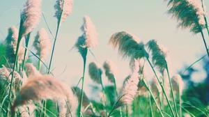 Earth Grass 2048x1356 Wallpaper