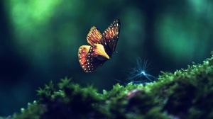 Animal Butterfly 1922x1080 Wallpaper