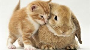 Animal Baby Animal Close Up Cute Friend Kitten Pet Rabbit 1920x1440 Wallpaper