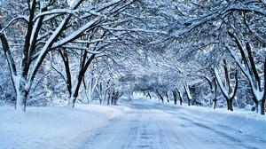 Canopy Road Snow Tree Winter 3840x2160 Wallpaper