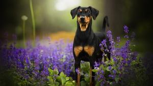 Baby Animal Depth Of Field Dog Flower Puppy 2048x1342 wallpaper
