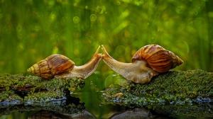 Bokeh Love Macro Reflection Snail Water 1920x1080 Wallpaper
