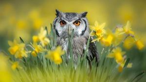 Bird Wildlife Summer Daffodil Flower Yellow Flower 2048x1363 Wallpaper
