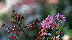 Rose Berries Motion Blur Blossom Spring 2000x1333 Wallpaper
