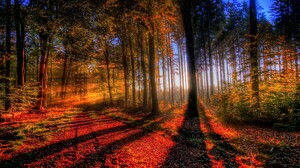 Fall Forest Leaf Nature Sunbeam Tree 2560x1440 Wallpaper