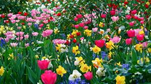 Daffodil Field Grass Leaf Meadow Petal Tulip 3872x2592 Wallpaper