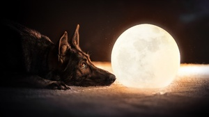 Dog German Shepherd Moon Pet 2048x1365 Wallpaper