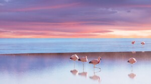 Animal Beach Bird Flamingo Horizon Ocean Sea Sunset 1920x1080 Wallpaper