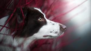 Dog Pet Muzzle 2048x1243 wallpaper
