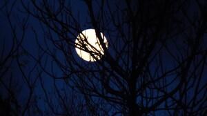 Tree Silhouette Night Blue 4000x3000 Wallpaper