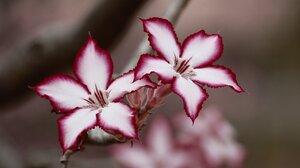 Blur Flower Lily Macro Nature White Flower 3840x2160 Wallpaper
