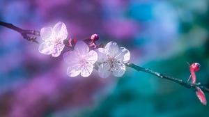 Blossom Branch Spring 6000x4000 Wallpaper