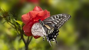 Flower Summer Macro Insect Blur 5472x3648 Wallpaper