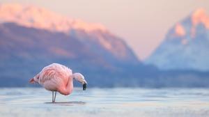 Mountain Lake Bird Wildlife 3072x2048 Wallpaper