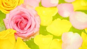 Close Up Flower Petal Pink Flower 1920x1086 Wallpaper