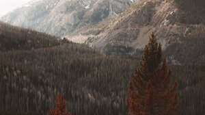 Landscape Nature Mountains Snowy Mountain Trees Pine Trees Forest Portrait Display 3276x4096 Wallpaper