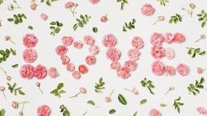Flower Love Pink Flower 6000x4000 Wallpaper