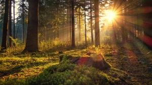Dawn Forest Germany Morning Moss Sun 3600x2400 Wallpaper