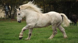 Animal Horse 2126x1339 Wallpaper